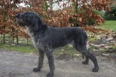 Tanja Duitse Staande Hond